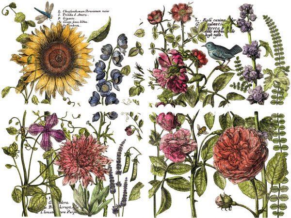 IOD BotanistsJournal2 ALL LR Botanists Journal Transfer - new format