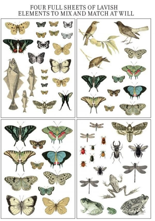 entomology four pages