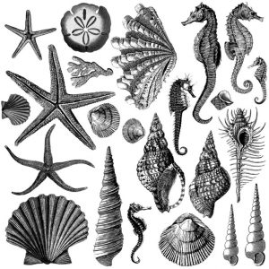 Seashore stamp