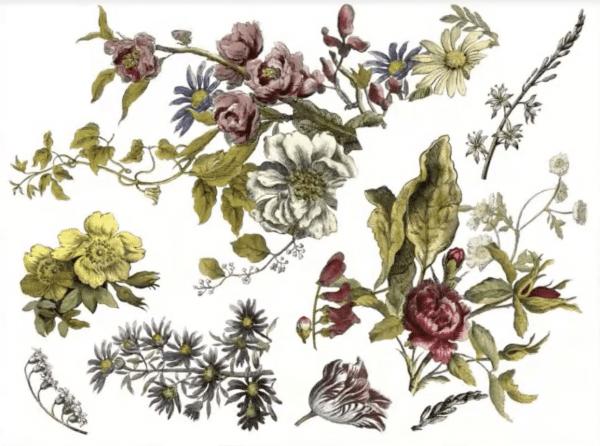 Screen Shot 2021 03 09 at 11.18.53 PM Floral Anthology IOD Transfer